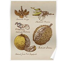 Steampunk  Fruit Poster