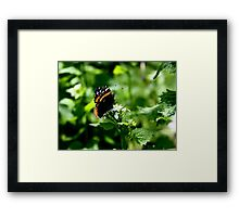 Monarch Butterfly Photography  Framed Print