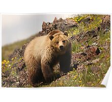 Grizzly & Wildflowers Poster