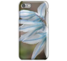White and blue scilla flowers iPhone Case/Skin