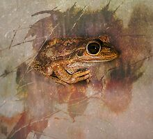 Praying Frog by Julia Harwood