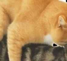 STANK CAT hoot SWAGGIN hoot SHIRT AIGHT Sticker