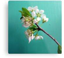Still Life with Spring Metal Print