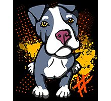 Blue Pit Bull Pup  Photographic Print