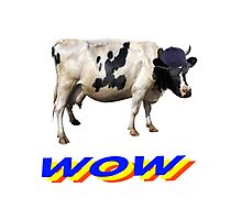 wow cool cow with hat and glasses Photographic Print