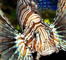 Lionfish Closeup Sticker