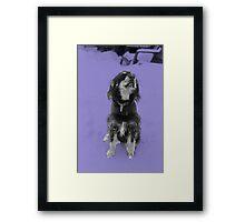 Dexter in the snow - Purple Framed Print