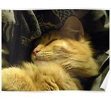 Golden Snuggle Poster