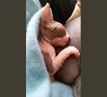 Kitten sphynx cat bicolor sleep Unisex T-Shirt
