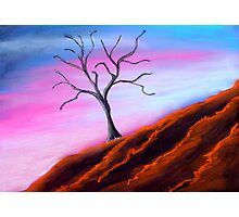 Solitary Tree Pink Sky Photographic Print