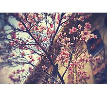 Spring Blossoms Photographic Print