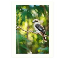 Kookaburra gracefully sitting in a tree Art Print
