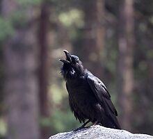 Raven calling by Lynn Starner