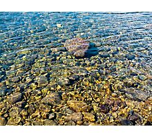 Clear water forest lake Photographic Print