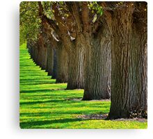 In line Canvas Print