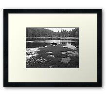 Pig Lake Framed Print