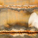 Mushroom - Marvelling by Marilyn Cornwell