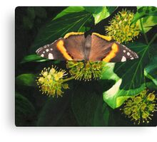 November butterfly on ivy Canvas Print
