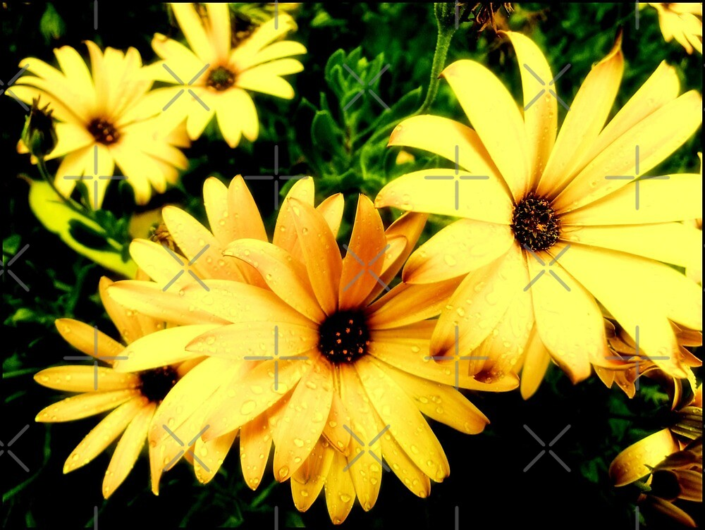 yellowlicious by webgrrl