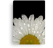 Montauk Daisy with Dewdrops on Petals Canvas Print