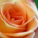 Soft Peachy Rose by Monnie Ryan