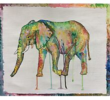 Rainbow elephant  Photographic Print