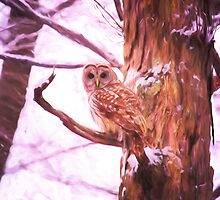 Barred Owl Looking At Me by daphsam