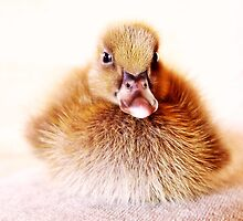cute ducky by webgrrl
