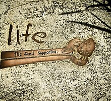 seeds of life.. by webgrrl