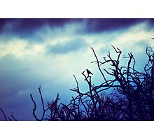 Guardian of the Shadows  Photographic Print