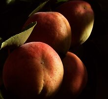 APRICOTS IN MY BACKYARD by webgrrl