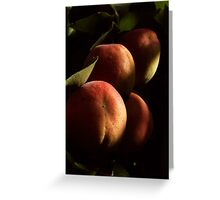 APRICOTS IN MY BACKYARD Greeting Card