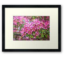 Crabapple blossoms - painted Framed Print