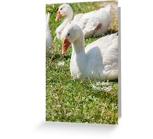 goose on meadow Greeting Card