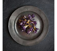 flowers on pewter plate Photographic Print