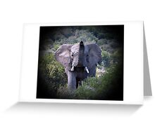 African Elephant, South Africa Greeting Card