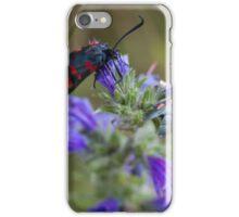 Five spot Burnet moths on wild flowers iPhone Case/Skin