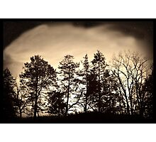 Treeline Nightscape  Photographic Print