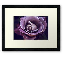 Fibonacci Rose Framed Print