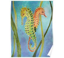 Lessons from the Seahorse Poster