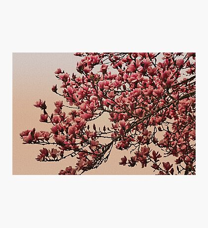 Magnolia Tree In Bloom - Antique Victorian Needlepoint Effect Photographic Print