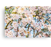 Floods of White & Pink Canvas Print