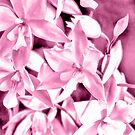 Cascading orchids - Pink by PhotosByHealy