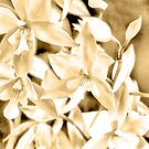 Cascading orchids - Tan by PhotosByHealy