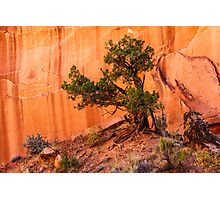 Grand Wash Canyon with Juniper Photographic Print