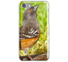 Spotted Towhee Looking Up iPhone Case/Skin