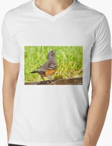 Spotted Towhee Looking Up Mens V-Neck T-Shirt