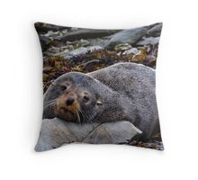Resting Seal Throw Pillow
