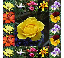 Vibrant Summer Flowers Collage Photographic Print