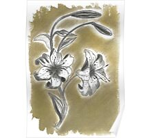 Lilium in charcoal (2 of 3) Poster